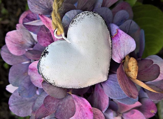 Hydrangeas, Heart, Autumn, Hydrangea Flowers