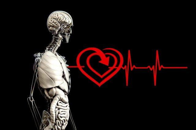 Anatomy, Human, Heart, Pulse Frequency, Heart Rate