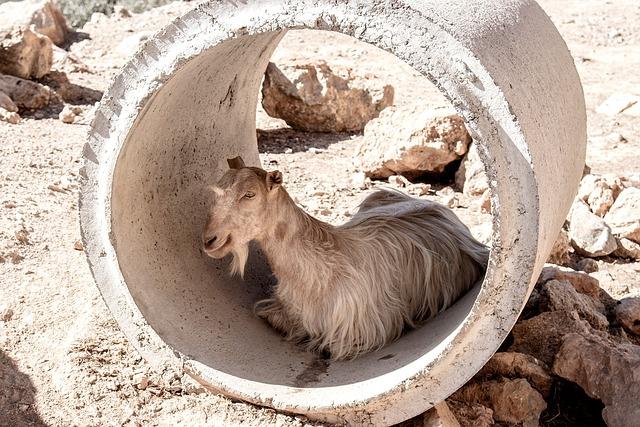 Goat, Tube, Greece, Summer, Heat