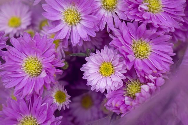 Heather, Purple, Background, Natural, Flowering Shrubs