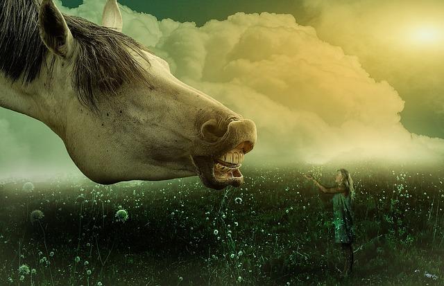 Horse, Girl, Animal, Grass, Heaven, Pasture, Wallpaper