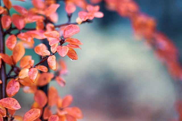 Leaves, Droplet, Drop, Bush, Hedge, Red, Orange, Yellow