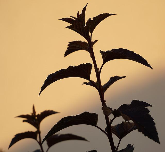 Plant, Shadow, Bush, Nature, Hedge