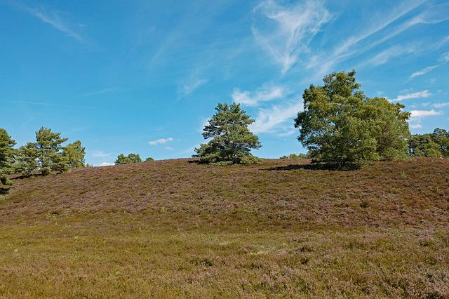 Heide, Heathland, Heather, Nature Conservation