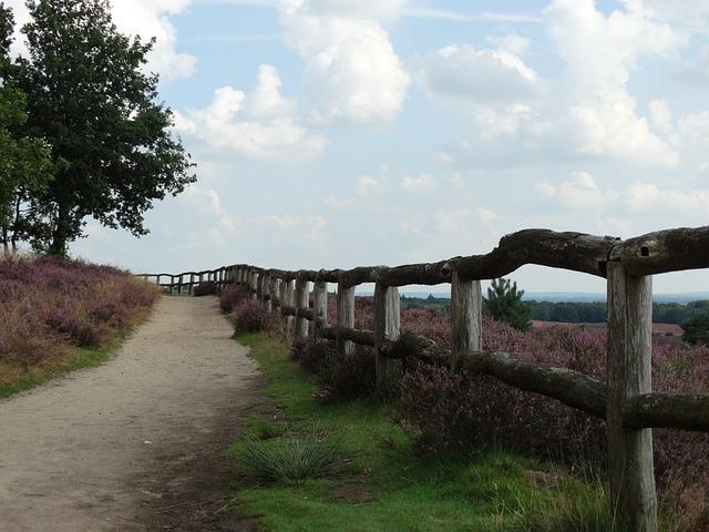 Hei, Heide, Flowering Heather, Fence, Landscape, Path