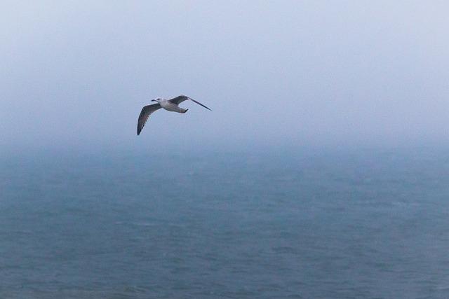 Seagull, Bird, Fly, Beach, Dune, Helgoland, North Sea