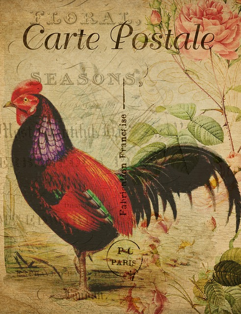 Postcard, Vintage, Hen, Rooster, Art, French, Card