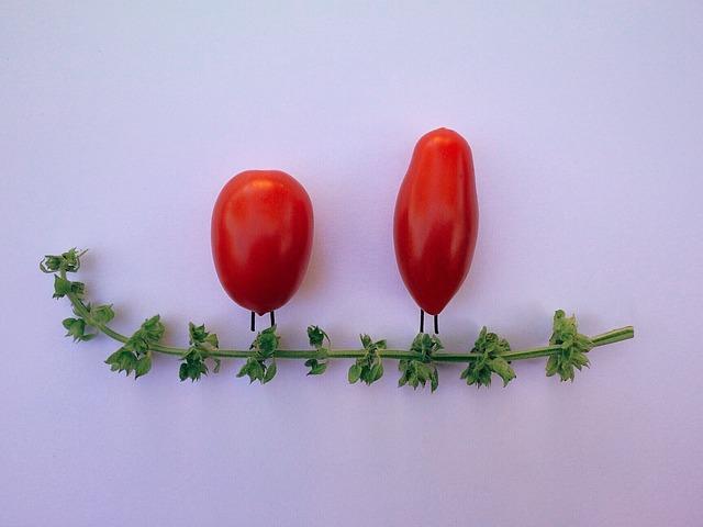 Tomato, Basil, Vegetable, Herb