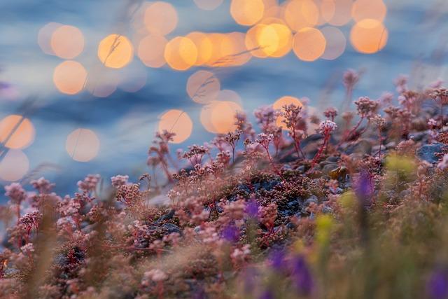 Sunset, Water, Reflection, Herb, Ocean, Sea, Beach