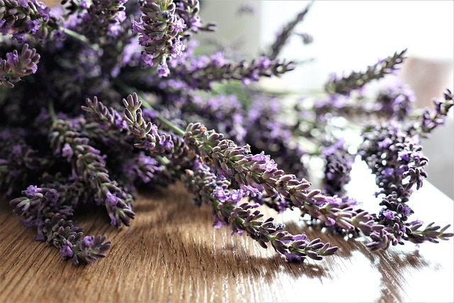 Lavender, The Smell Of, Flowers, Herbs, Violet, Aroma
