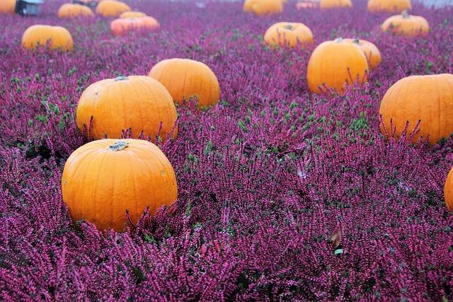 Autumn Flowers, Herbstdeko, Autumn, Halloween