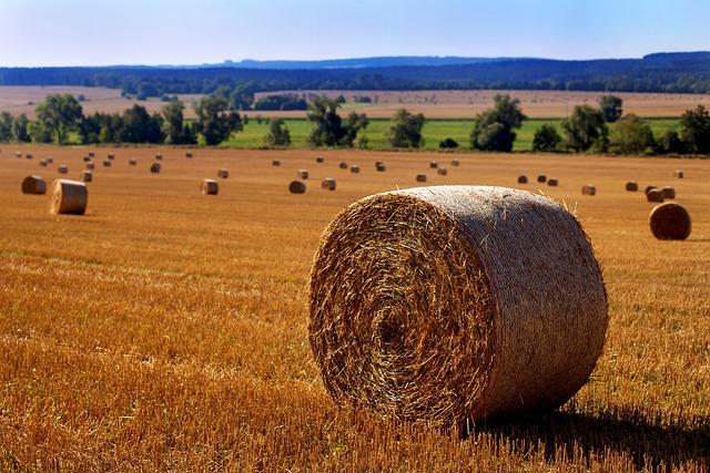 Straw, Straw Bales, Field, Herbstfeld, Harvest