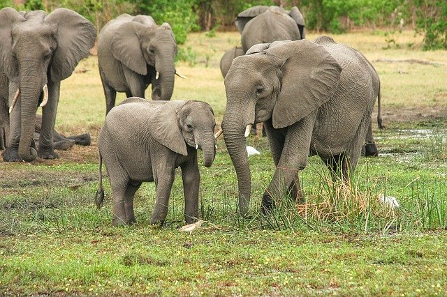 Elephants, Herd, Family, Calf, Mother And Child