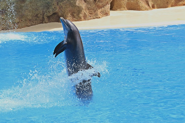 Delfin, Preview, Dolphins, Dolphinarium, Herd, Jumping