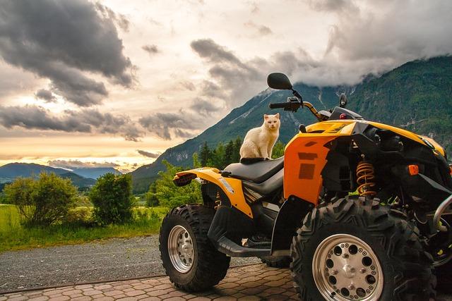 Cat, Quad, Austria, Hermagor, Carinthia, Sunset