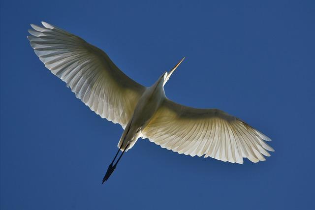 Animal, Sky, Bird, Wild Birds, Heron, Egret, Feathers