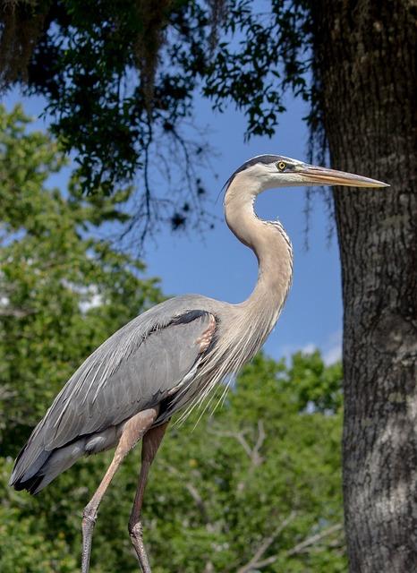 Nature, Heron, Bird, Wildlife, Animal