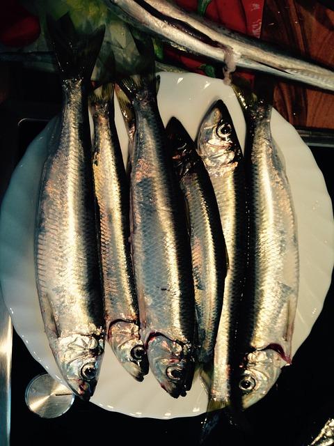 Baltic Sea, Herring, Fish