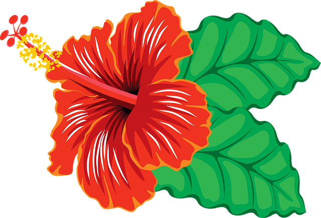 Flower, Hibiscus, Tropical