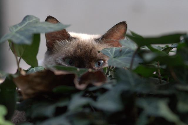 Cat, Eye, About, Hidden, Leaves