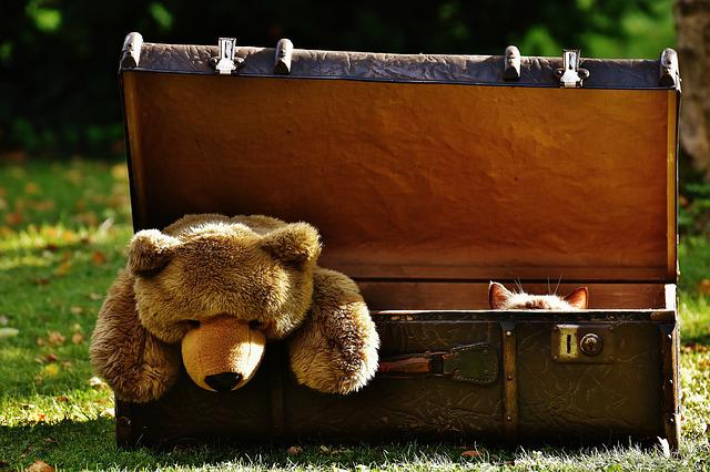 Luggage, Antique, Teddy, Cat, Hidden, Soft Toy