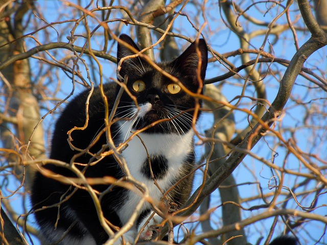 Cat, Hidden, Animal, Climb, Tree, Lurking