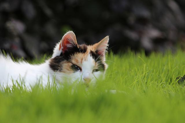 Cat, Grass, Relax, Animal, Green, Outdoor, Hide