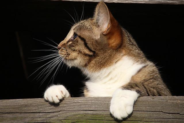 Cat, Kitten, Young Cat, Mackerel, Wood, Hiding Place