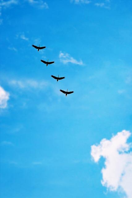 Birds, High Fly, Flying, Migrating, Wildlife