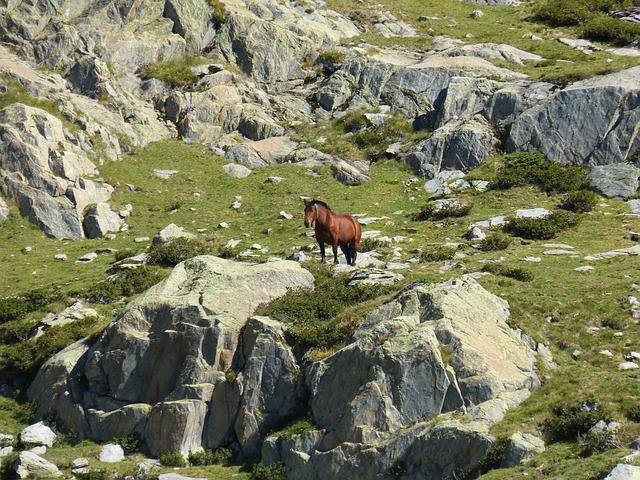 Horse, Rocks, High Mountain, Pyrenees, Port Of Tavascan