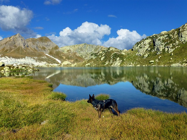 High Mountains, Bergsee, Mirroring, Hike With Your Dog
