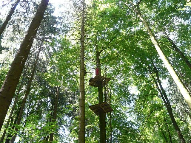 Climbing Forest, High Ropes Course, Climb, Drex