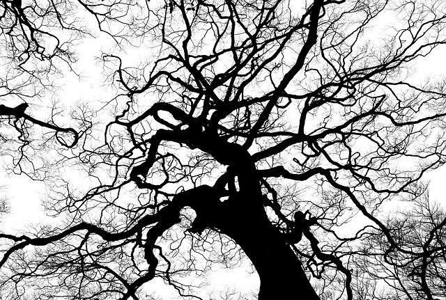 Tree, Silhouette, Branches, Tall, High, Canopy, Top