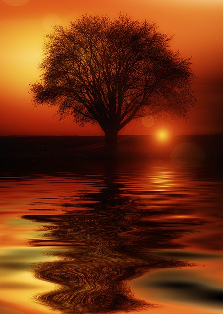 Tree, Mirroring, Water, High Water, Solitary, Sunset