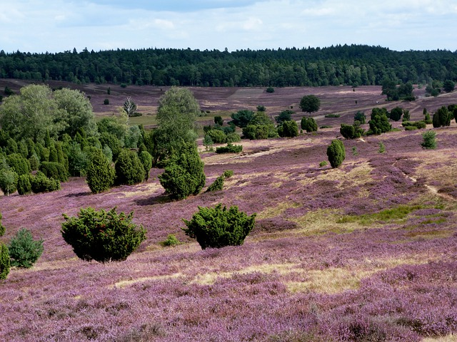 Lüneburg Heath, Landscape, Nature, Heather, Hiking