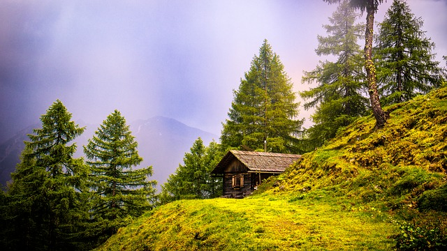 Alpine Hut, Hiking, Hut Hike, Lonely, Tree, Fog, Mood