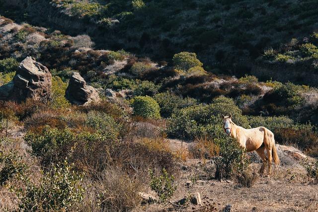 Horse, Field, Hill, Desert, Plants