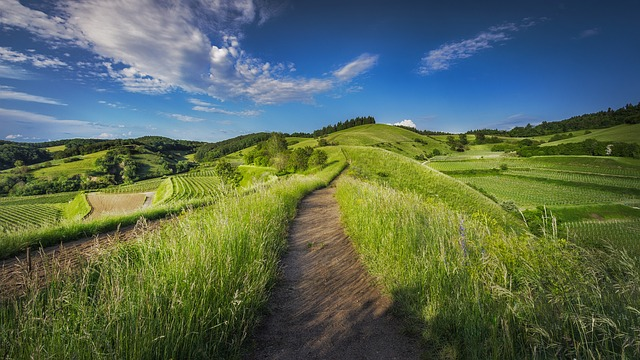 Countryside, Farm, Field, Grass, Grassland, Hill
