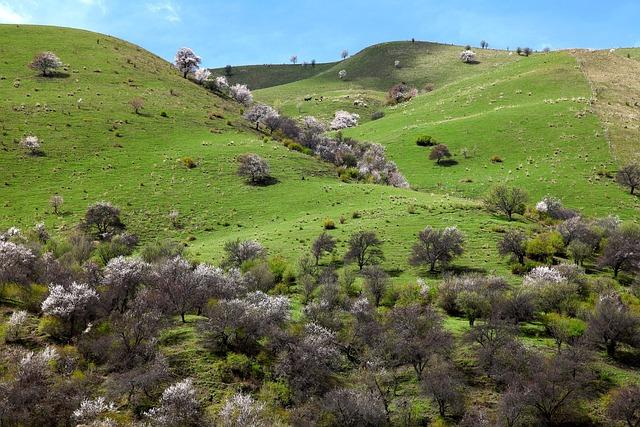 Landscape, Nature, Lawn, Hill