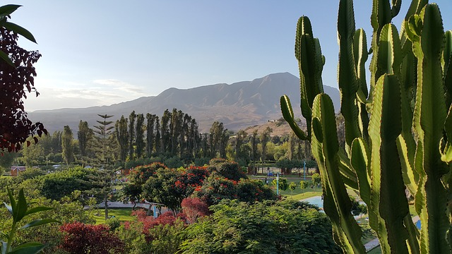 Landscape, Moquegua, Peru, Hills, Cactus