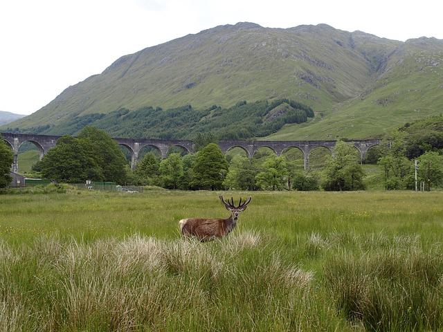 Glennfinnan, Viaduct, Hirsch, Railway, Scotland