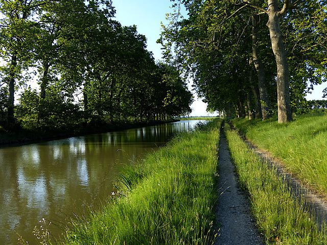 Nature, Canal Du Midi, Trees, Herbs, Water, History