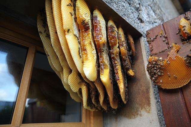 Hive, Behind The Shutters