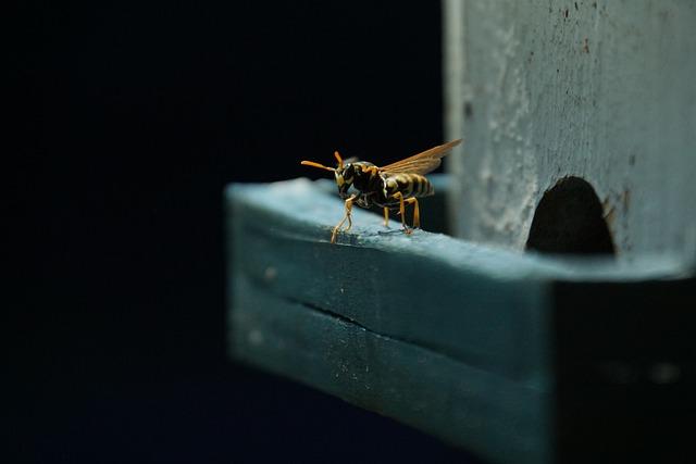 Wasp, Field Wasp, Insect, Hive, 4k Wallpaper