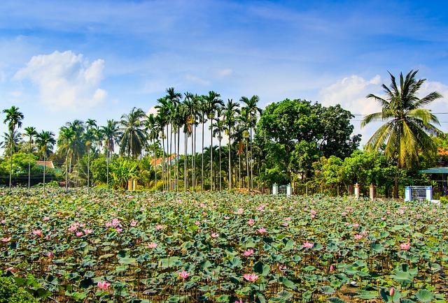 Lotus, Ninh, Hoa, Outdoor