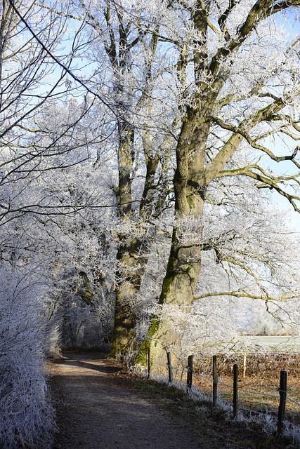 Hoarfrost, Cold, Winter, Frozen, Frost, Winter Time