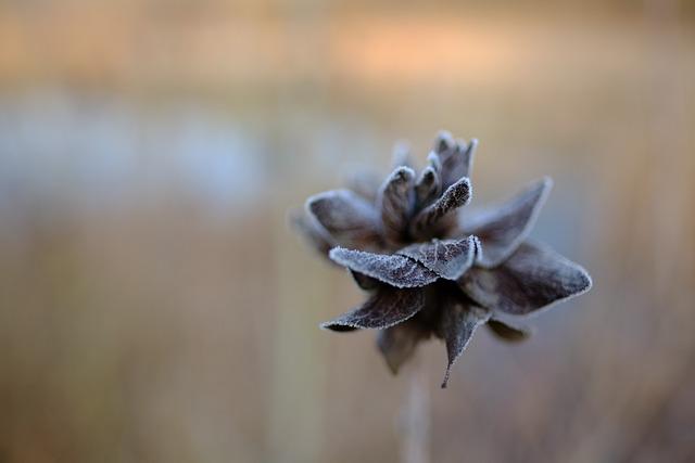 Winter, Frost, Winter Landscape, Hoar Frost, Hoarfrost