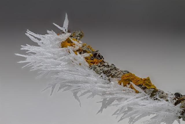 Hoarfrost, Ice, Ice Crystal, Mushroom, Tree Fungus, Icy