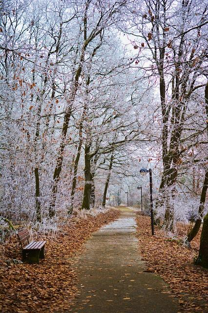 Winter, Park, Hoarfrost, Trees, Iced, Aesthetic, Wintry