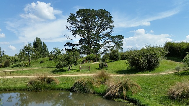 Tree, Landscape, Hobbiton, New Zealand